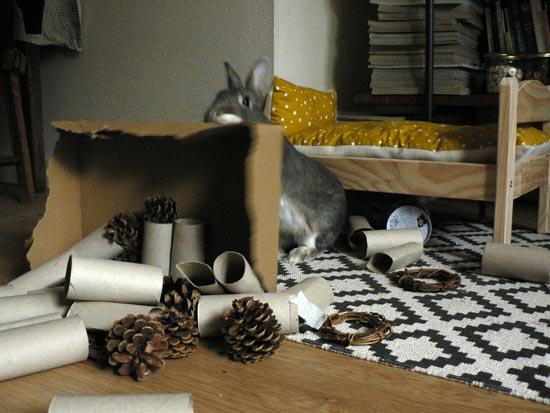 divertir son lapin et enrichir l 39 environnement jeux et jouets pour lapins la dure vie du. Black Bedroom Furniture Sets. Home Design Ideas