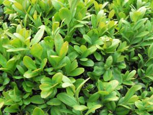 lières plante intérieur