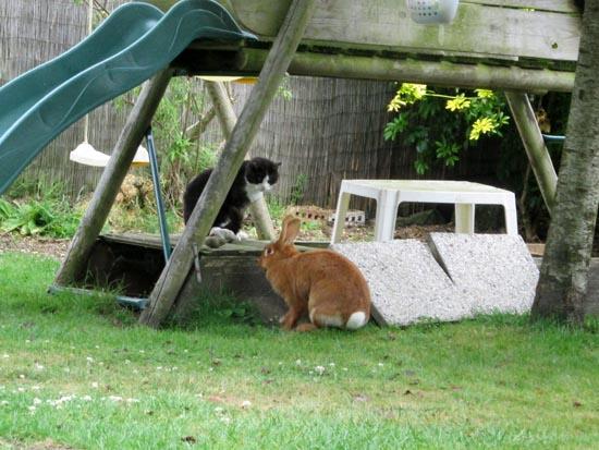 lapins de compagnie au jardin la dure vie du lapin urbain. Black Bedroom Furniture Sets. Home Design Ideas
