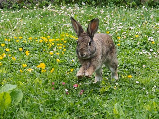 Lapins de compagnie au jardin la dure vie du lapin urbain - Plante contre l humidite dans la maison ...