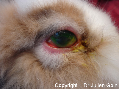 animaux yeux rouges