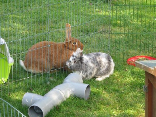 Comment faire cohabiter deux lapins qui ne se connaissent pas [PUNIQRANDLINE-(au-dating-names.txt) 35