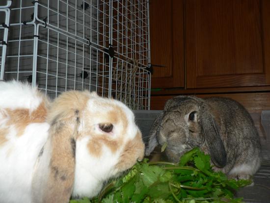 Comment faire cohabiter deux lapins qui ne se connaissent pas [PUNIQRANDLINE-(au-dating-names.txt) 46
